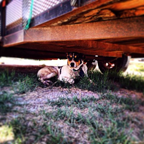 Hanging Out Dogs Shade Hot