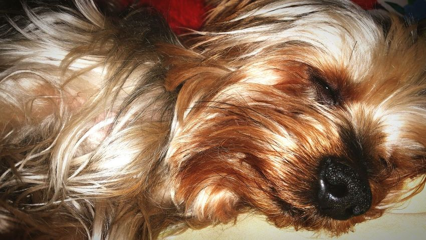 Yorki Relaxing Hi! Enjoying Life First Eyeem Photo