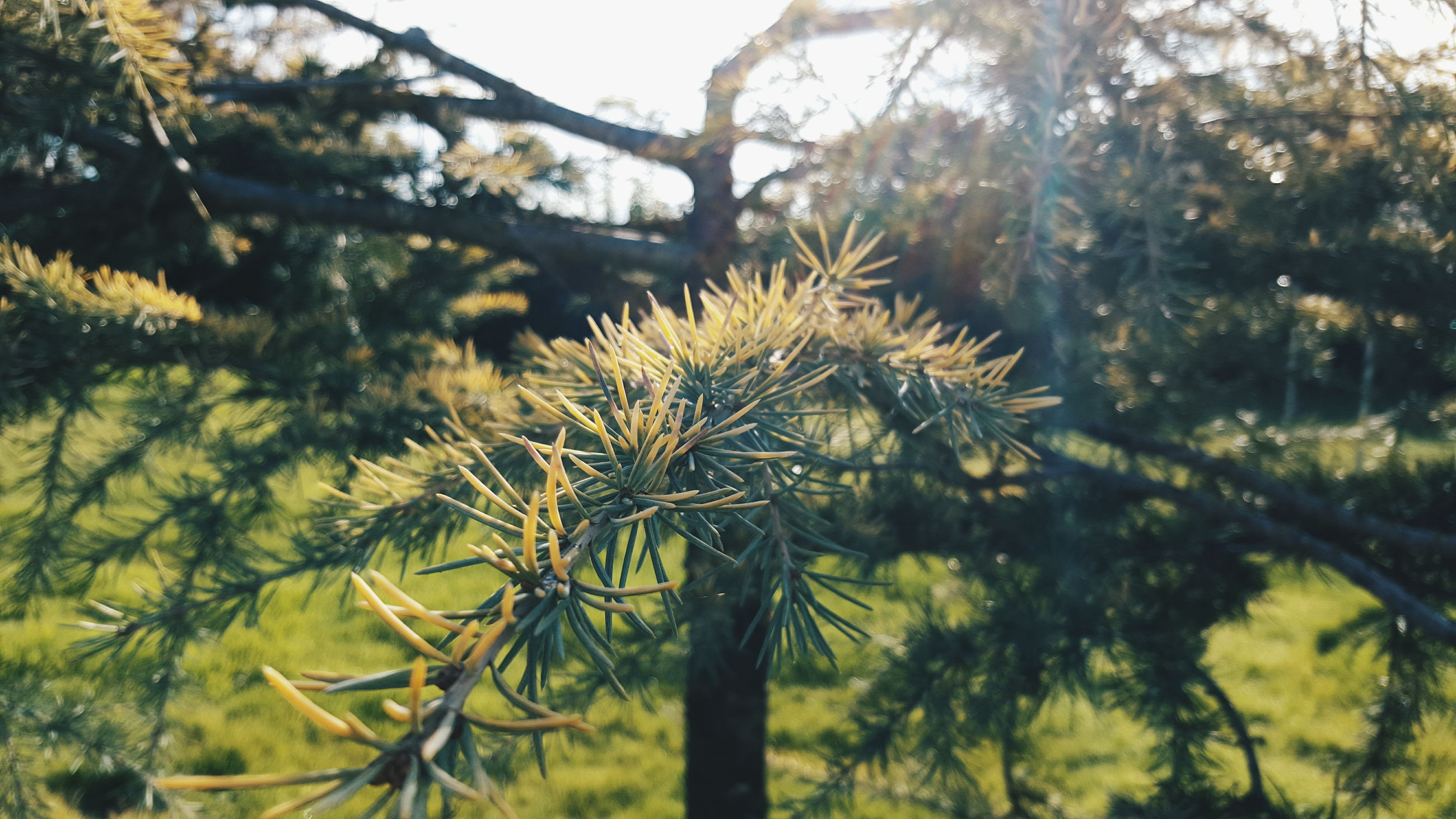 nature, growth, no people, sunlight, outdoors, day, green color, beauty in nature, plant, low angle view, tree, close-up, sky