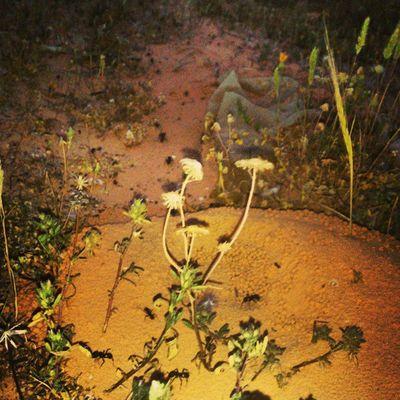 الطريق الي بيت ال نمل