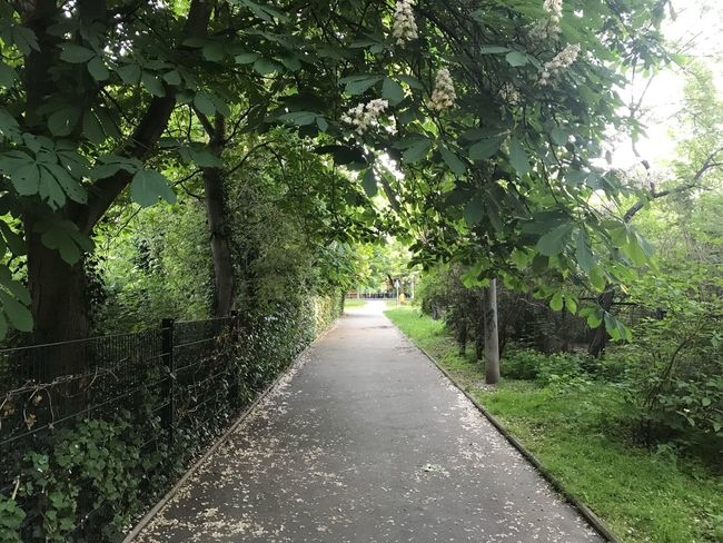 Plant Tree The Way Forward Direction Growth Green Color Nature Day No People Outdoors Sunlight Beauty In Nature Diminishing Perspective Footpath Road Tranquility Architecture Park