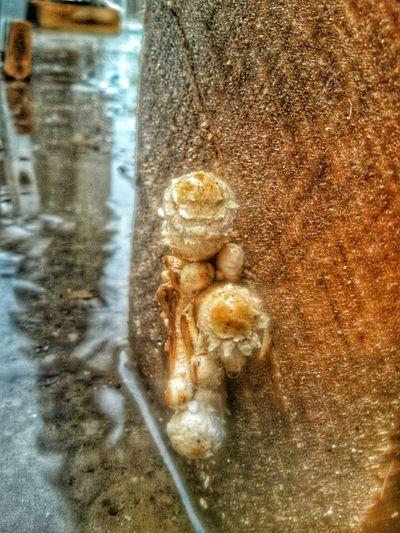 Mushrooms Urban