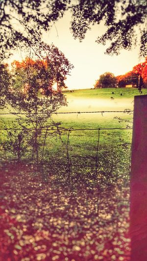 What I Value Nature On Your Doorstep Hello World Off To Greener Pastures First Eyeem Photo