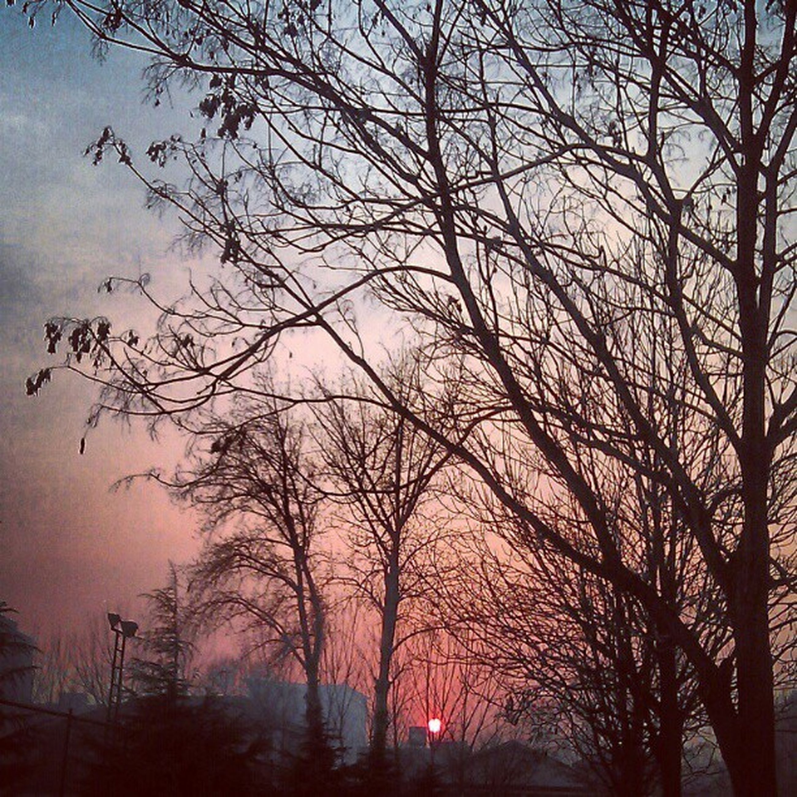 bare tree, tree, silhouette, sunset, branch, sky, tranquility, beauty in nature, scenics, tranquil scene, nature, cloud - sky, low angle view, dusk, idyllic, orange color, outdoors, no people, cloud, tree trunk