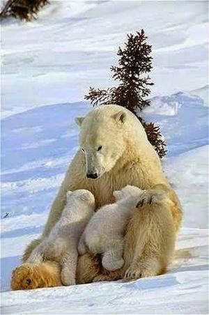 L'amore grandissimo di una madre per I suoi cuccioli....