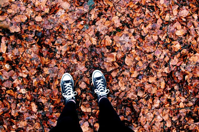 Shoe Autumn Leaf Standing Low Section Human Leg Canvas Shoe Change Pair High Angle View Human Body Part One Person Day Directly Above Real People Lifestyles Adult Outdoors People Nature VSCO Converse 😚