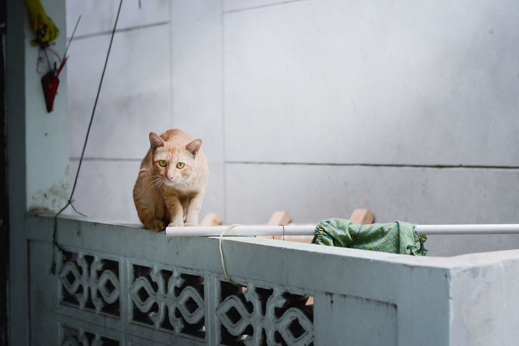 cat Animal Themes Architecture Day Domestic Animals Domestic Cat Feline Looking At Camera Mammal No People One Animal Outdoors Pets Portrait Sitting