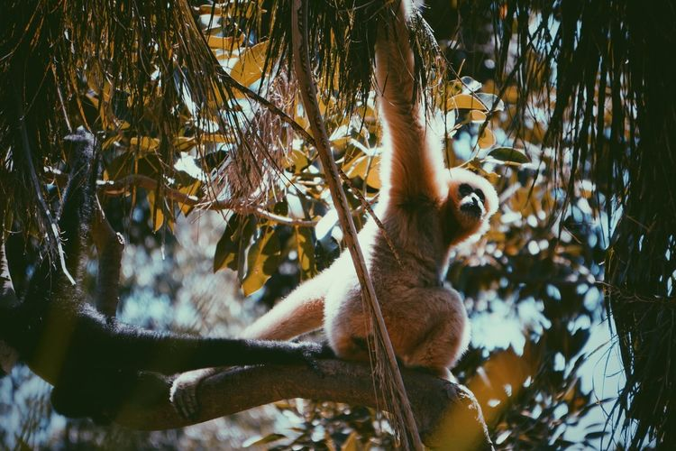 Albino Animal Monkeys Plant Animal Animal Themes Animal Wildlife Vertebrate Animals In The Wild One Animal Tree Nature Day No People Outdoors Close-up