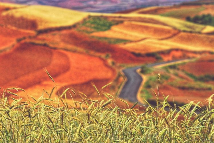 Yunnan China Photos Landscape_photography Landscape_Collection China Rural Scene Field Aerial View Multi Colored Agriculture Sunlight Landscape Grass Patchwork Landscape Cultivated Land Farmland Rice Paddy Agricultural Field Terraced Field Rice - Cereal Plant Cereal Plant