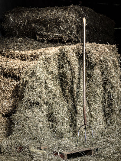 pitchfork Farming Hay Fork Grass Hay Haybarn No People Pitchfork Stable
