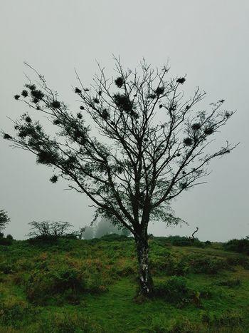 Bird Tree Rural Scene Sky Landscape Flock Of Birds Migrating Spread Wings Seagull Medium Group Of Animals Large Group Of Animals Avian