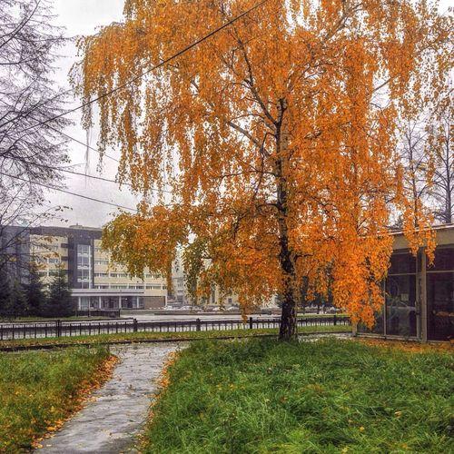 осень осеньвгороде Екатеринбург