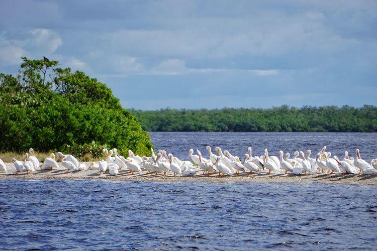 Birds sitzung on sand bank against sky