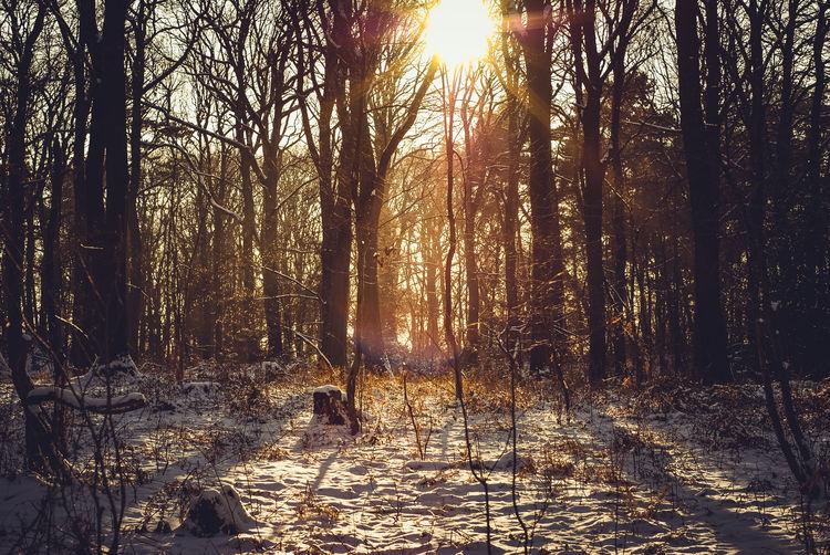 Branch Forest It's Cold Outside Outdoors Showcase: February Sunset Tranquil Scene Tree Treelined Wahner Heide Wahnerheide Winter WoodLand Woods