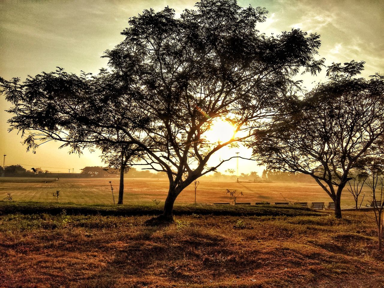 tree, field, tranquility, landscape, beauty in nature, nature, tranquil scene, scenics, sky, lone, growth, sun, outdoors, no people, sunset, branch, tree trunk, silhouette, sunlight, bare tree, grass, day
