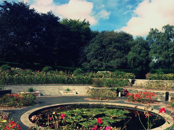 Tree Garden Flower Day Sky Botanical Garden Person Tranquil Scene Botany Plant
