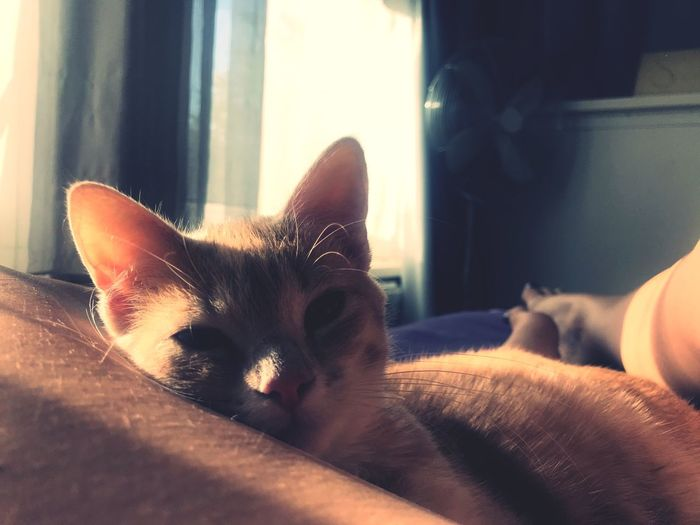 Waking up Window Sun Shadow Pets Domestic Animal Mammal One Animal Domestic Animals Vertebrate Cat Animal Themes Domestic Cat Indoors  Feline Relaxation Bed Lying Down