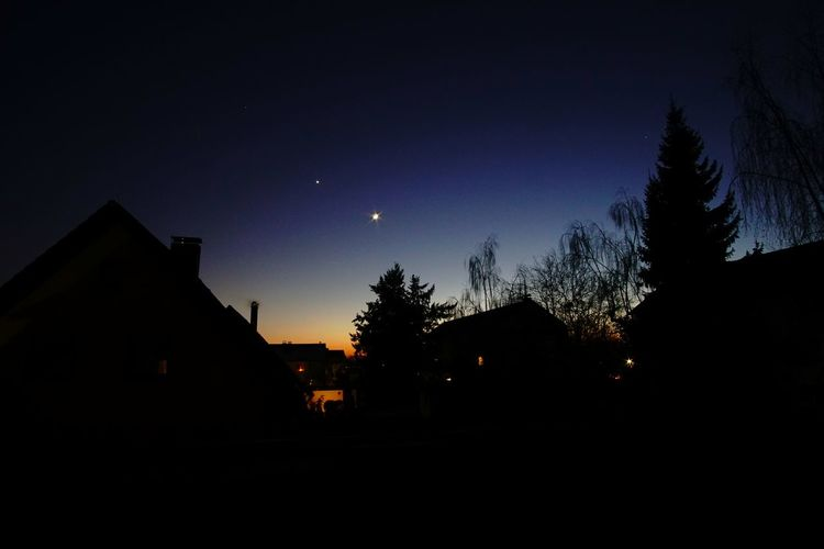Night Sky Tree
