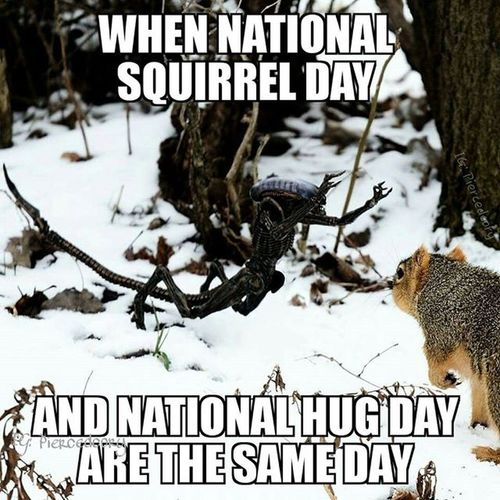 Happy national hug a Squirrel day! Necasnow Nationalhugday Nationalsquirrelday Squirrelappreciationday Funwiththesquirrels Toyhumor Neca Alien Dogalien Tcb_whattimeisit_lateagain Tcb_reallifemesssessions