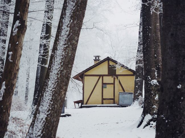 Snow Winter Cold Temperature Tree Trunk Tree Forest House Outdoors Nature Beauty In Nature Snowing at Gempen,switzerland