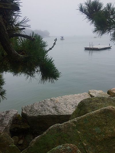 Water Nature Lake Tree Day Beauty In Nature Outdoors Scenics Tranquility Tranquil Scene No People Nautical Vessel Fog Harbor Moored Sky Landscape_Collection Nature Beautiful Nature Duxbury Bay Close-up Stormy Weather Foggy Morning