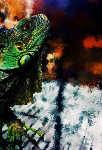 The lonely dragon. One Animal Animal Themes Reptile Iguana Pet Dragon Dinosaur Captivity Cage Lonely Adult Painting Painting Effect Digital Art Iphone Apps
