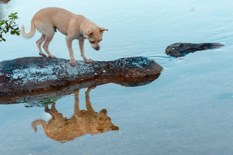 Side view of dog standing on rock by lake