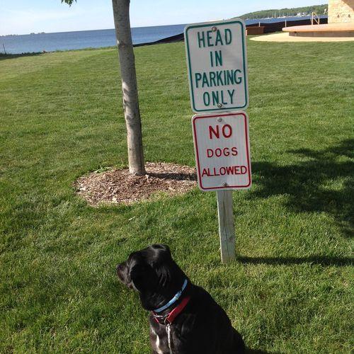 """""""Doc"""" saying WTH? Door County, Wisconsin Door County Wisconsin Life Wisconsin Wisconsin World :) Dogs Dog Love Dog"""