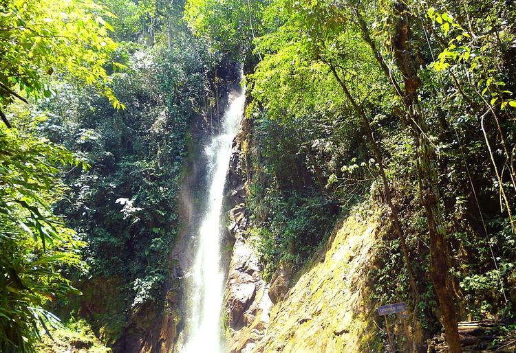 Low Angle ViewWaterfall Growth Beauty In Nature Tree Scenics Forest Green Color Nature Branch Tranquil Scene Lush Foliage Tranquility Tree Trunk Moss Day Outdoors Non-urban Scene Green Majestic Freshness Place Of Interest Vacations Beauty In Nature Peru-oxapampa Falling Water