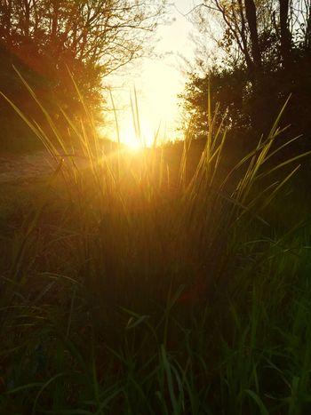 Solar flare Sunshine Sunshine ☀ Sunset Soaking Up The Sun Weedy Grasses Enjoying The Sun Walking Around
