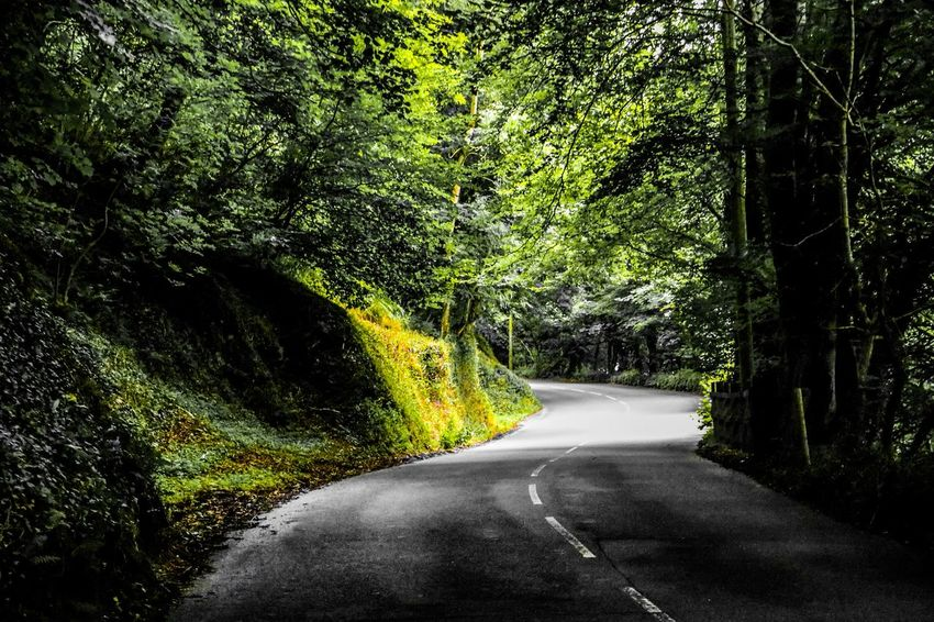 Beauty In Nature Curve Green Road Nature Nature Road Road View The Way Forward