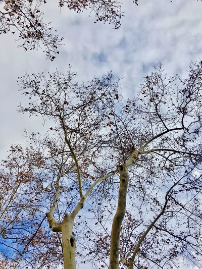Sky And Clouds Tree Low Angle View Branch Nature Growth Beauty In Nature Sky Outdoors No People Day