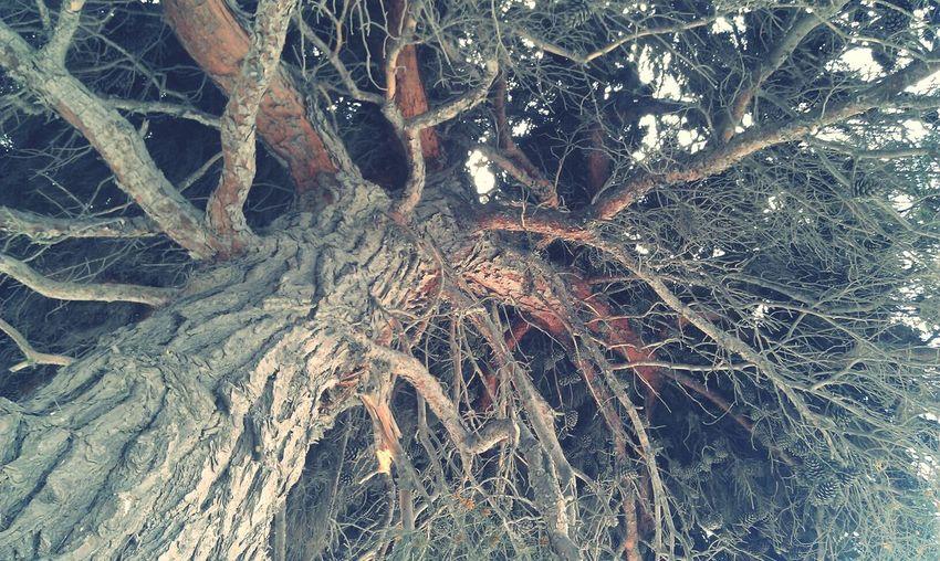 Tree Taking
