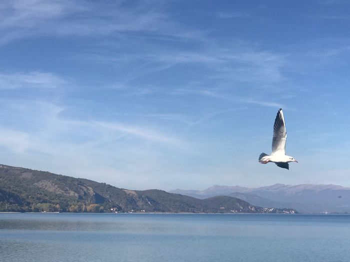 Seagull Albania Gabbiano In Volo Gabbiano Seagul Mountain Nature Day Sky Water Animal Themes Animals In The Wild One Animal No People Lake Flying Scenics Beauty In Nature Outdoors Bird Spread Wings