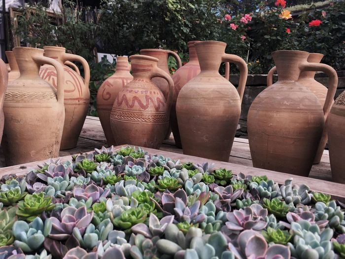 Close-up of cactus and pots in garden