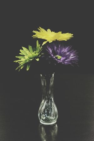 Paint The Town Yellow Flower Black Background Flower Head Studio Shot Indoors  Fragility Close-up No People Nature Yellow Flower Yellowflowers Yellow Petals Vase Of Flowers