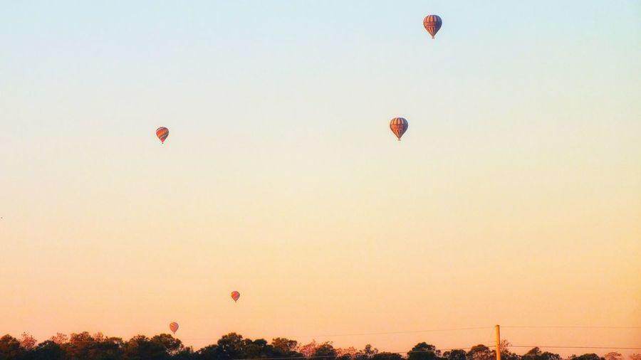 Dawn Flying Hot