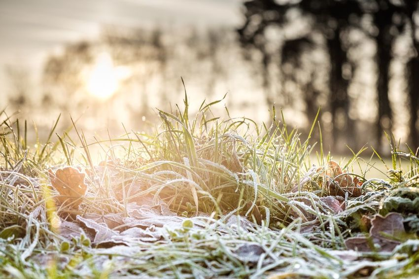 Nature Grass Growth Outdoors Plant No People Beauty In Nature Close-up Surface Level Marram Grass Day Sunbeams Frosty Mornings Wintertime Tenebrio.photos Fuji-xe2s Showcase: December Grass Sunlight