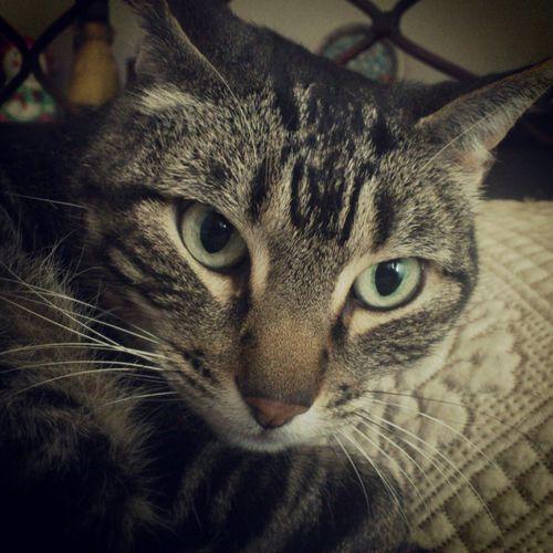 Zack Kerouac First Eyeem Photo Cats Cats Of EyeEm Pets Cat♡ Cat Lovers