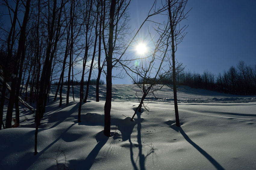 Frozen sunlight Bare Tree Beauty In Nature Cold Temperature Nature No People Outdoors Shadow Snow Sun Sunlight Tree Winter