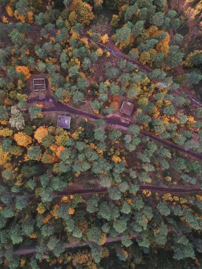 High angle view of leaves on tree during autumn