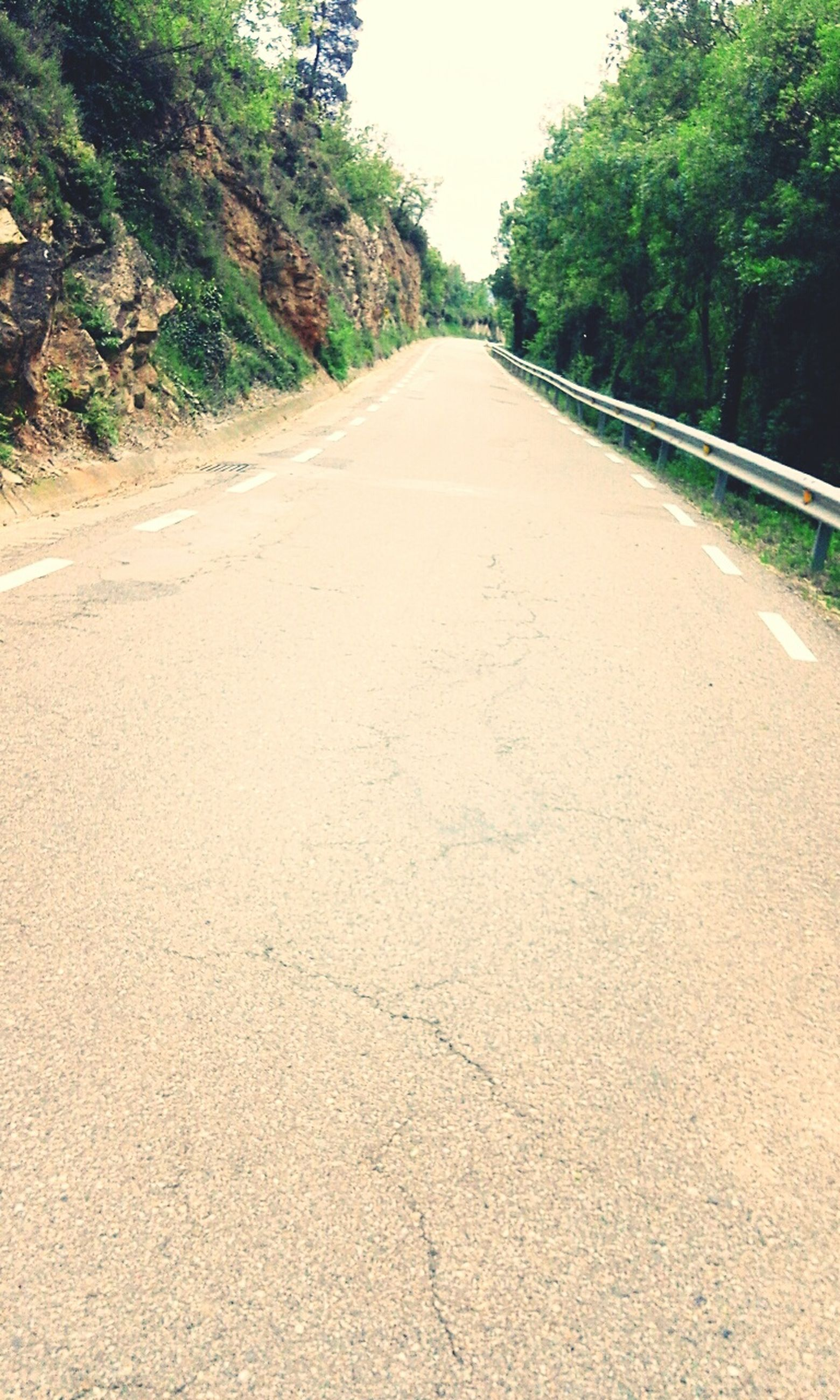 road, the way forward, tree, transportation, diminishing perspective, no people, day, nature, outdoors, growth, scenics, sky
