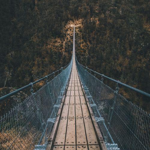 Suspension Bridge By Trees