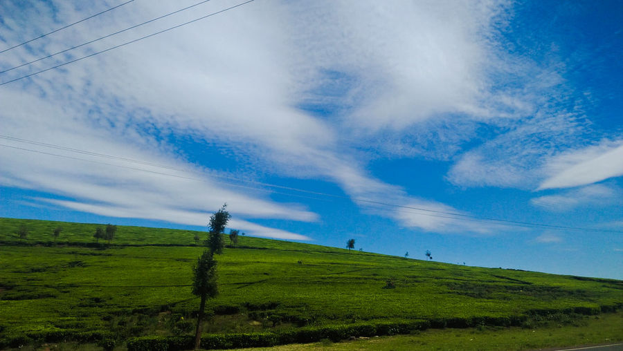 Tea Plantation  Tea Plant Plantation Tea Rural Scene Blue Agriculture Social Issues Field Sky Landscape Cloud - Sky