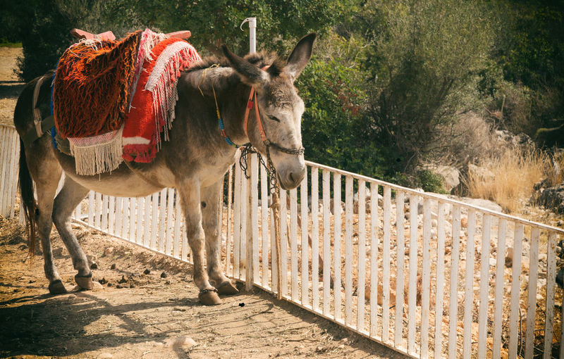 Side View Of Donkey By Railing