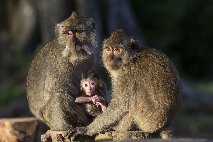 Monkeys sitting outdoors