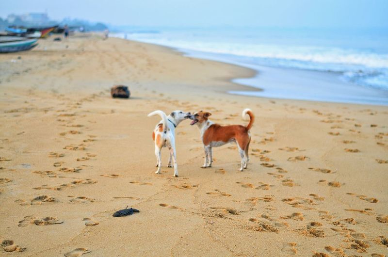 Rear view of dog standing on sand