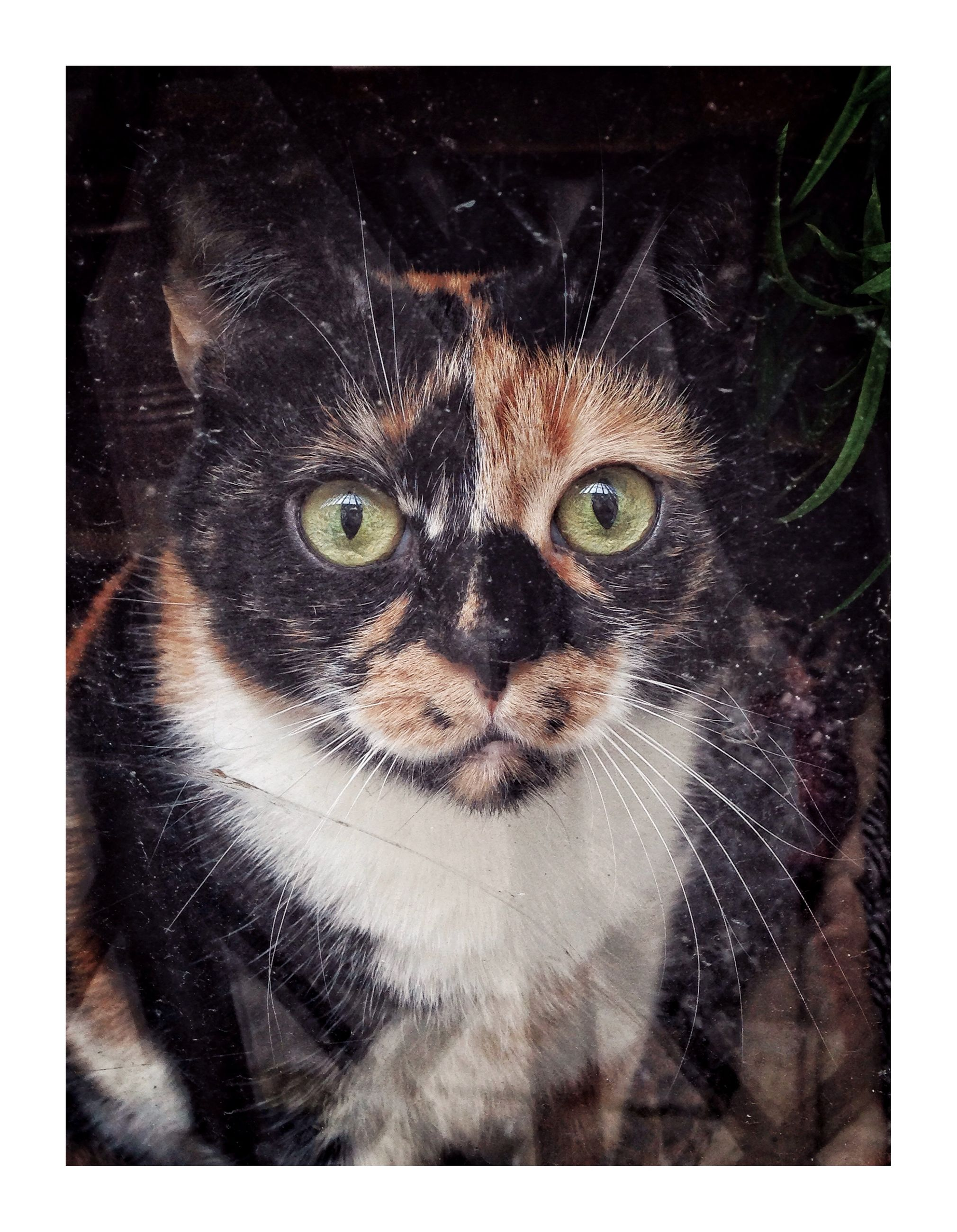 cat, pets, domestic, domestic cat, mammal, one animal, feline, domestic animals, portrait, looking at camera, close-up, transfer print, whisker, animal body part, auto post production filter, people, studio shot, animal eye