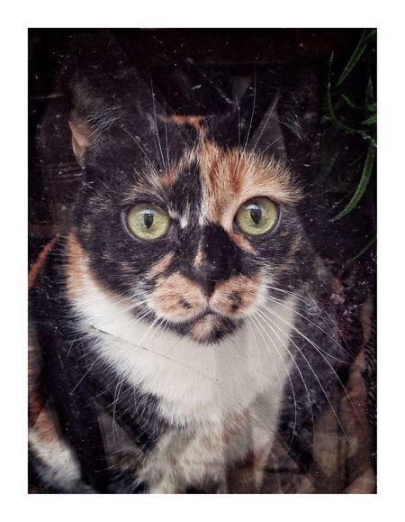 Rue tranquille Mammal Pets Cat Portrait Domestic Domestic Animals One Animal Domestic Cat Animal Body Part Black Background