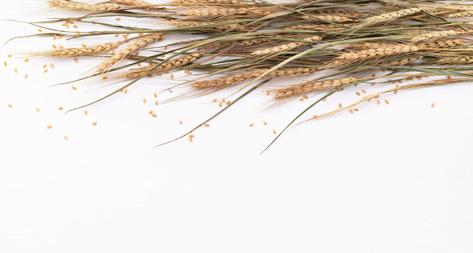 Directly above shot of dried plant against white background